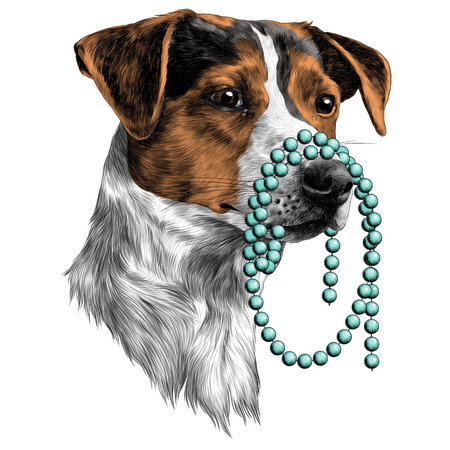 The dog with the beads in my mouth Jack Russell Terrier head, sketch. Vector graphics, color picture.