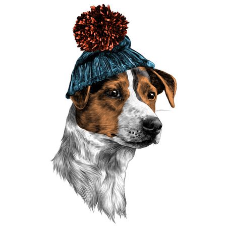 Dog in hat and scarf Jack Russell Terrier head, winter clothing sketch. Vector graphics color picture.