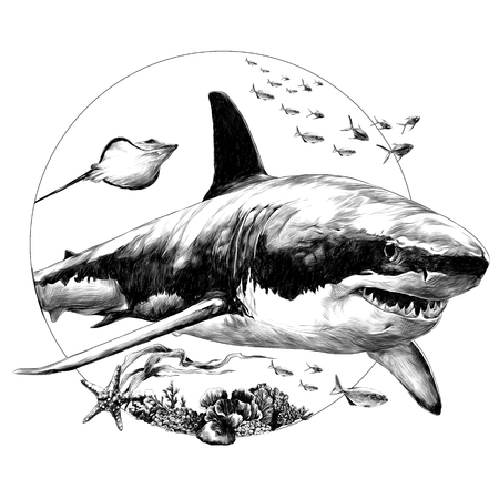 Shark sketch for t-shirt vector graphics monochrome, black-and-white drawing.