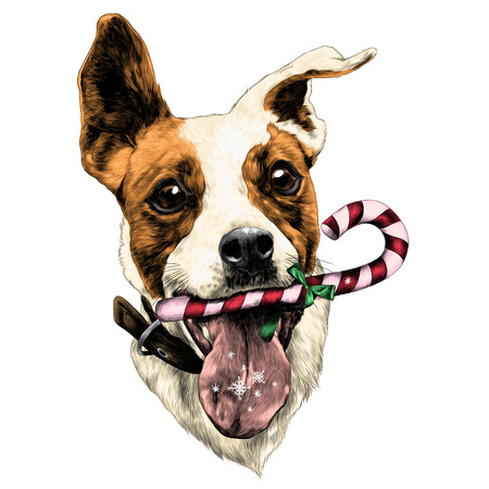 Head dog Jack Russell Terrier fun with candy, sketch. Vector graphics, color picture. Illustration