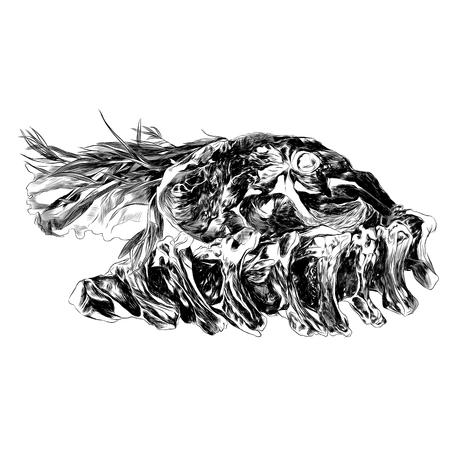 肉のスケッチ、ベクターグラフィックス。モノクロ、白黒描画。
