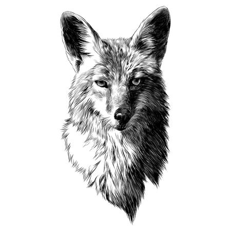 Szkic kojot, grafika wektorowa głowy. Rysunek monochromatyczny, czarno-biały.