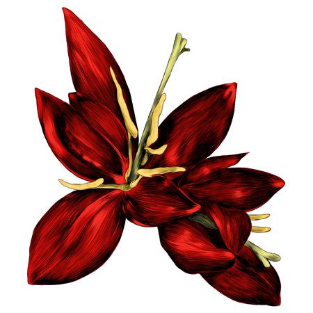 シダの花。ブルーレッドピンストライプシダスプラウトスパイラル、スケッチ。ベクターグラフィックス、カラー画像。