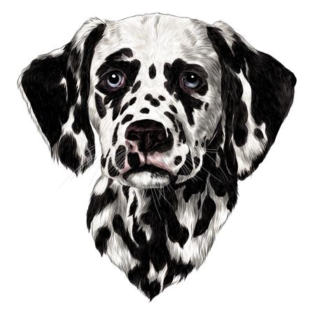 Dalmatians sketch, vector graphics color drawing.