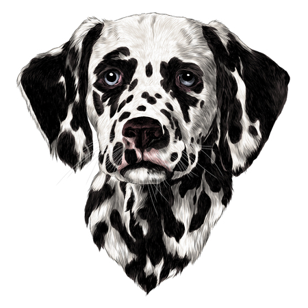 Dalmatians sketch, vector graphics color drawing.