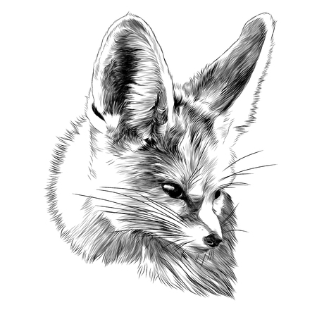 Fenik sketch, fox head. Vector graphics monochrome, black and white drawing. 일러스트