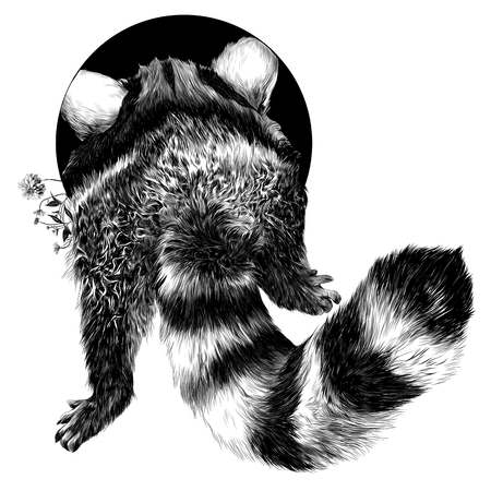 Raccoon sketch vector graphics. Black-and-white, monochrome pattern.
