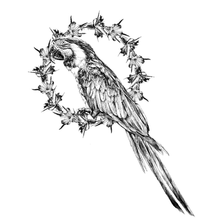 Parrot with flowers in the frame, sketch. Vector graphics monochrome, black-and-white drawing. Stock Illustratie