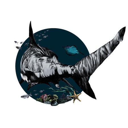 Shark sketch for a t-shirt back, Vector graphics, color picture.