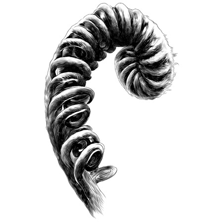 Fern curl fern sprout spiral, sketch. Vector graphics monochrome, black-and-white drawing.