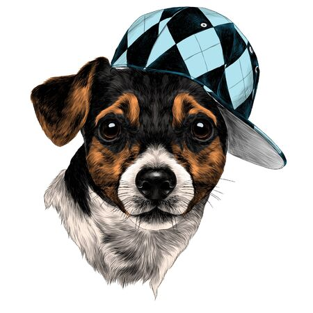 Dog Jack Russell Terrier head with a cap, sketch. Vector graphics monochrome, colored drawing.