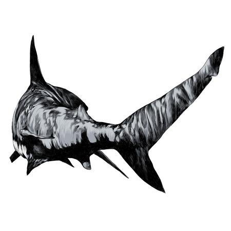 Ilustracja szkic rekina. Kolorowy obraz grafiki wektorowej.