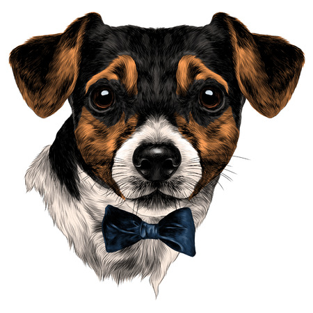 Dog Jack Russell Terrier with bow head, sketch. Vector graphics, color picture.