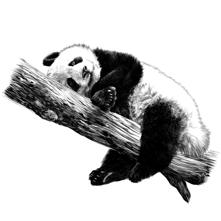 Panda lies sleeping on a branch sketch vector graphics monochrome black-and-white drawing