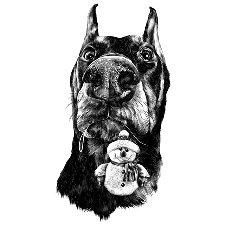 Head dog breed Doberman plush snowman in the teeth sketch vector graphics monochrome drawing