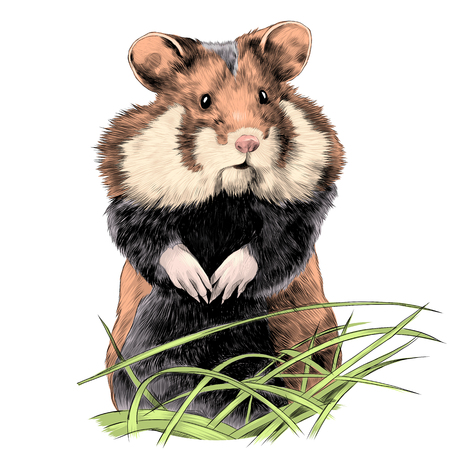 hamster with fat cheeks standing in the grass sketch vector graphics color picture