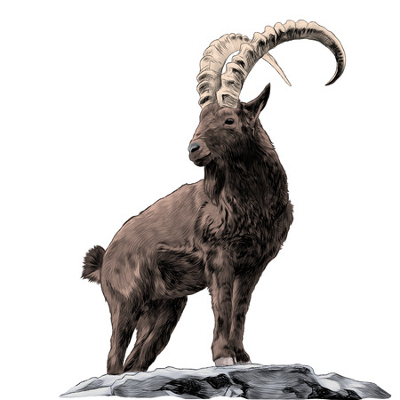 Mountain goat sketch vector