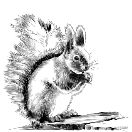 Squirrel sitting on a rock and gnawing a nut sketch graphics, black and white drawing