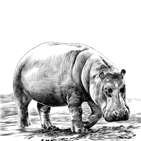 Hipopotam szkic wektor. Ilustracje wektorowe