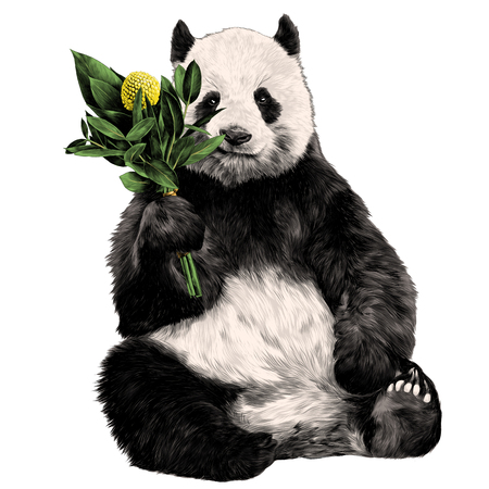 the Panda sits with a bouquet in his paw sketch vector graphics color picture