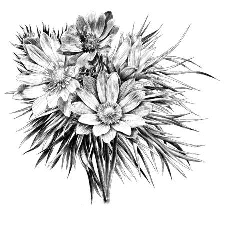 アドニスの花の枝は花束セットリーススケッチグラフィックス、白黒の図面