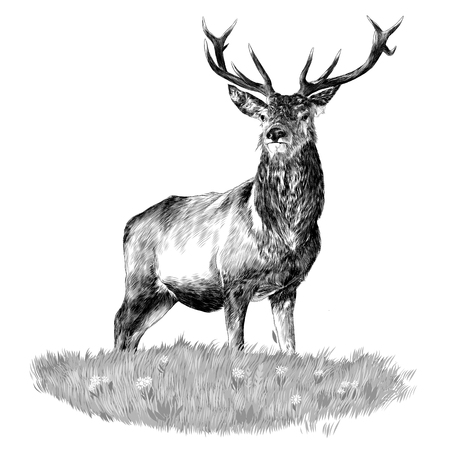 Deer head sketch vector. Çizim