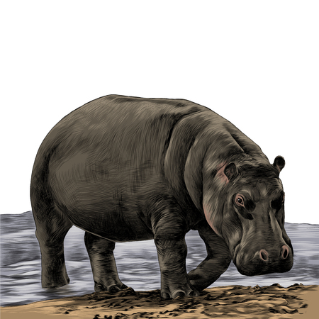 the Hippo is on the sandy shore of the sketch vector graphics color picture
