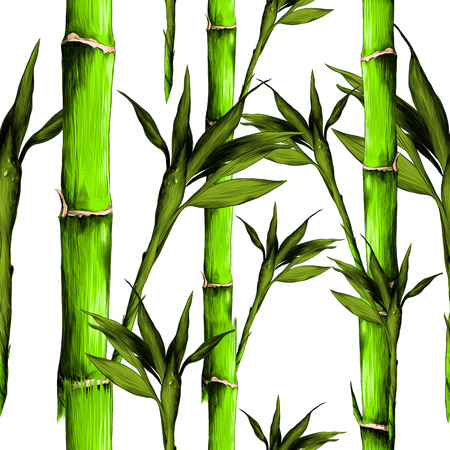 Green leaves, branches, stem bamboo pattern texture frame sketch graphics colored picture