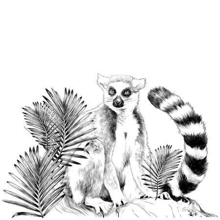 lemur sitting on a tree trunk near the branches of a palm tree sketch vector graphics monochrome drawing Illustration