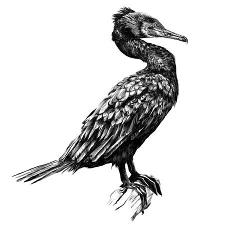 Vogel die zich op volledige hoogte bevindt op een droge addertje onder het gras. Schets vector. Stock Illustratie