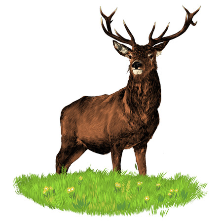 Confident and dominant deer standing on a green grass graphics sketch colored drawing Ilustração