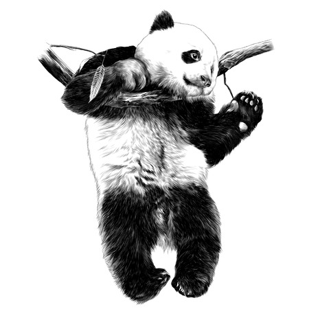 Panda hanging on a branch and swinging his legs sketch graphics of black and white drawing 일러스트