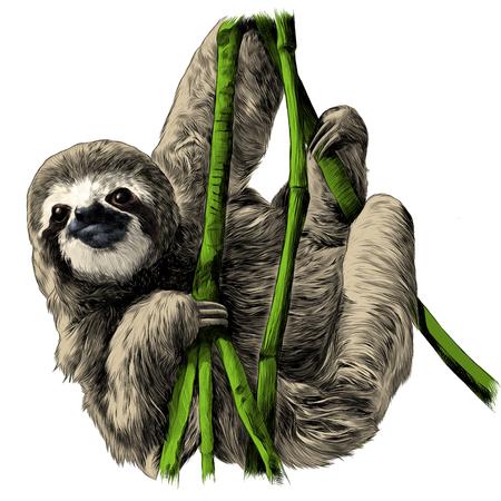 枝にぶら下がっているナマケモノは、ベクトルグラフィックスのカラー画像をスケッチ