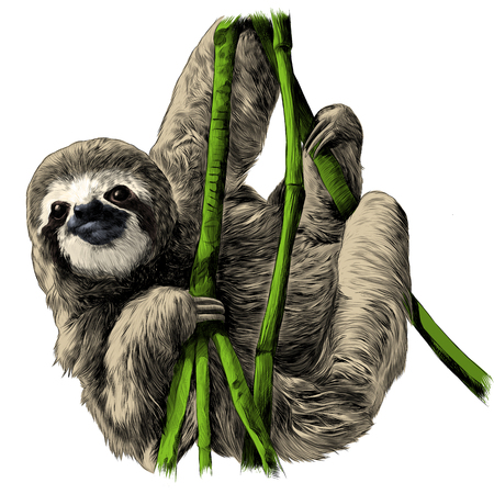 Sloth hanging on the branches sketch vector graphics color picture