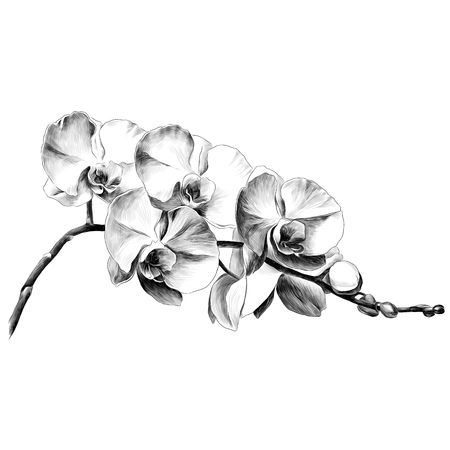 Orchid flower. Sketch vector. 矢量图像