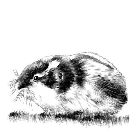 Lemming sketch vector graphics monochrome black-and-white drawing