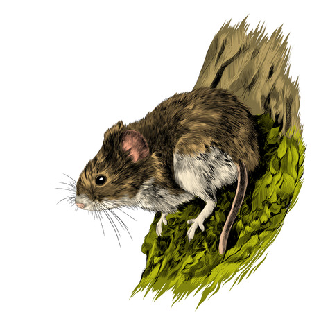 field mouse hanging on a tree trunk, sketch vector graphics color picture