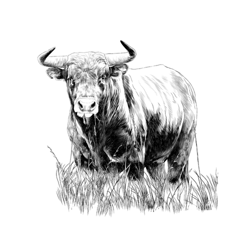 bull sketch vector graphics monochrome black-and-white drawing 版權商用圖片 - 95808704
