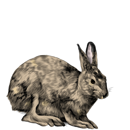 a hare is sitting, sketch vector graphics color picture