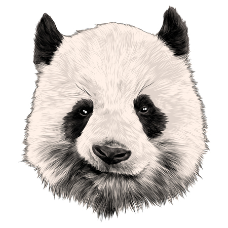 Head Panda grins sketch vector graphics color picture