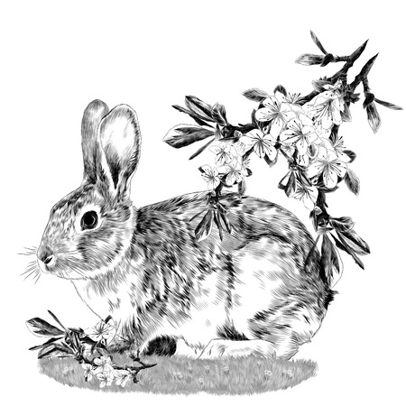 Bunny sitting on the grass next to the branches of the Apple tree sketch vector graphics monochrome drawing