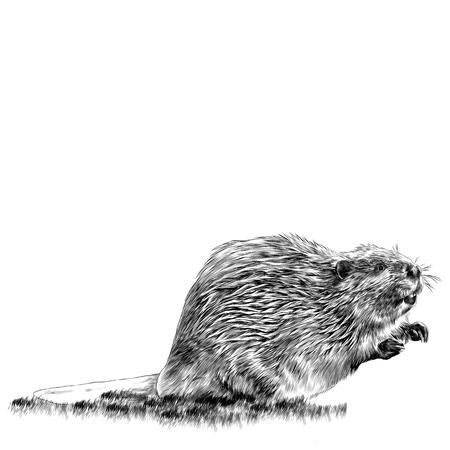 Beaver sketch gráficos vectoriales monocromo dibujo en blanco y negro