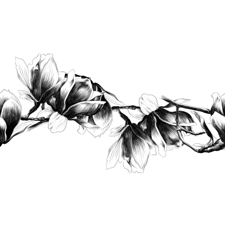 Seamless strip of Magnolia flower. Sketch vector.