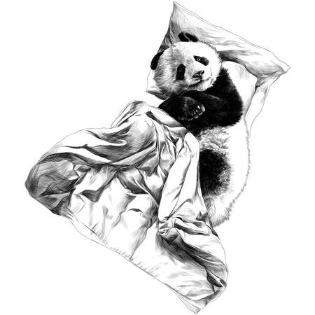 Panda lies on a pillow under a blanket sketch vector graphics m figure Illustration
