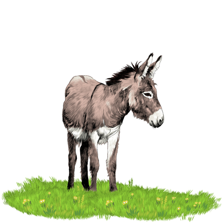Donkey standing on the grass and looking in the direction of sketch graphics colored picture