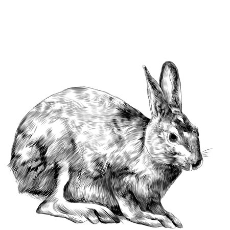 A hare is sitting, sketch vector graphics monochrome drawing