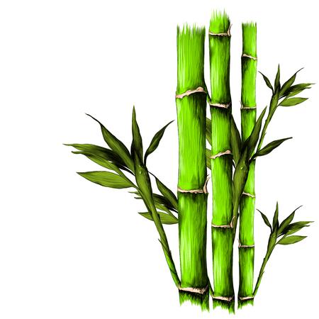 葉枝ステム竹模様花テクスチャフレームシームレススケッチベクトルグラフィックスカラー画像