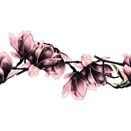 Seamless strip of Magnolia flower sketch vector graphics color picture