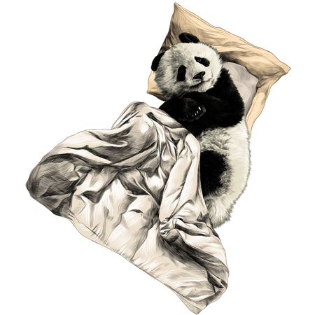 Panda lies on a pillow under a blanket sketch graphics colored picture