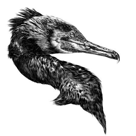 Vogel aalscholver hoofd schets vector graphics zwart-wit tekening